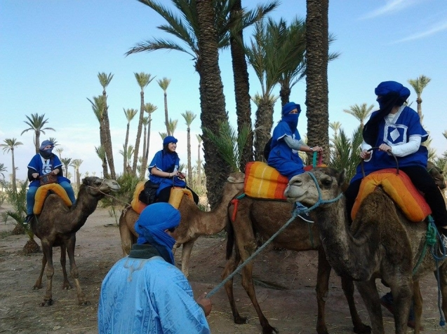 marrakech en dromadaires